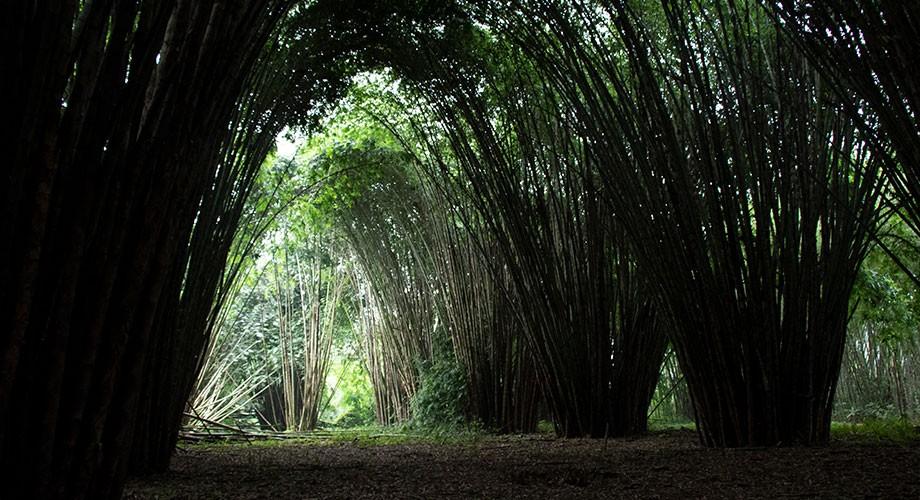Bosque Tropical Río Palenque
